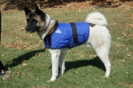 Cooling Coat for our four legged friends
