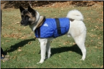 HyperKewl Evaporative Cooling Dog Coat